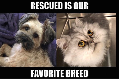 rescued is our favorite breed